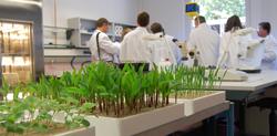 BASF germination