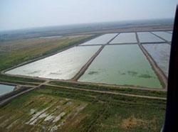 Iraq Fish Farm