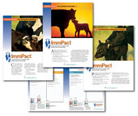 ImmPact Brochure Image