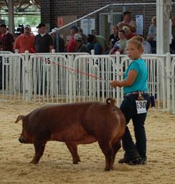 World Pork Expo 2008 youth swine show
