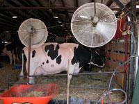 Barn Fans